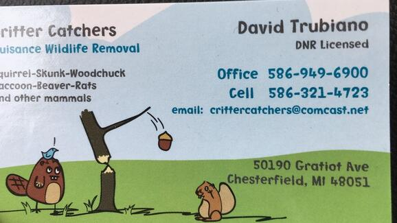 Critter Catchers 25 Recommendations Chesterfield Mi