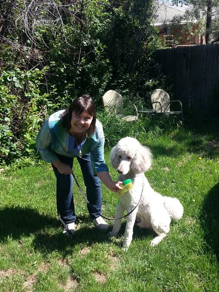 Sep 6 · AKC classes on trick dog, conformation, canine good