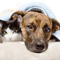 Wisconsin Humane Society Available Cats