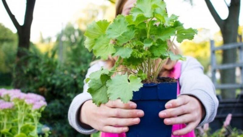 Tuintegels Zuid Holland.7 Jul 2018 Ruil Je Tuintegels Voor Gratis Planten Operatie