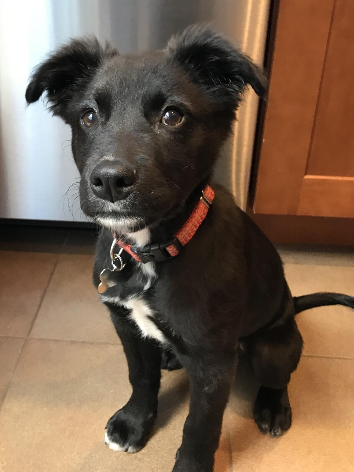 Mar 30 · Puppies Puppies and more Puppies Adoption event at Pet