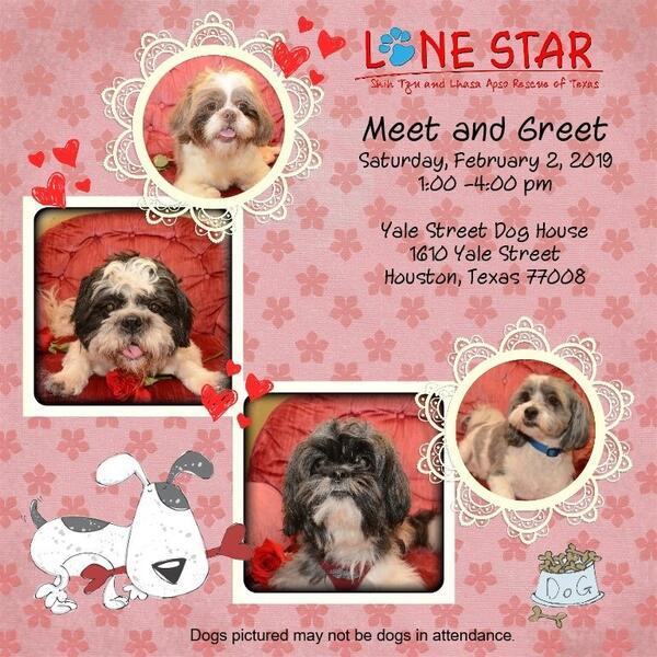 Feb 2 · First Saturday Adoption Event - Lone Star Shih Tzu Rescue