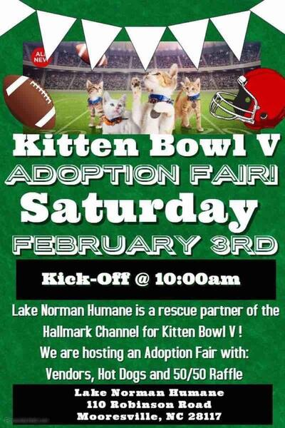 Feb 3 Lake Norman Humane Society Kitten Bowl 5 Nextdoor